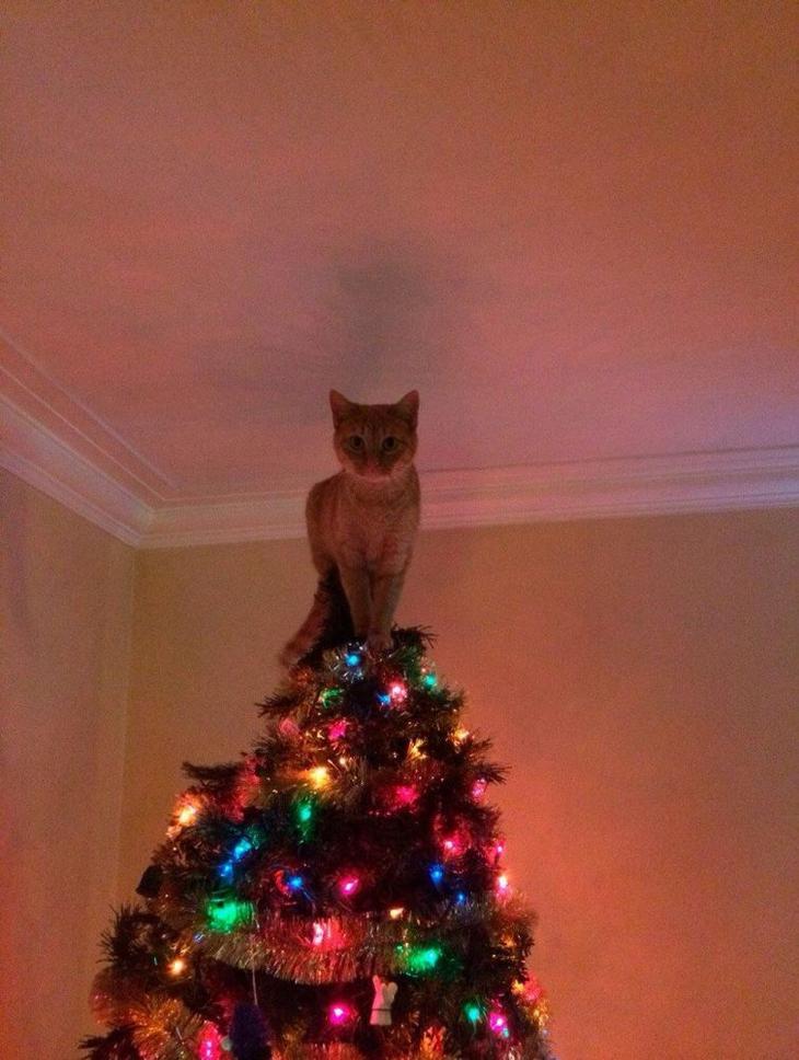 коты и новогодние ёлки, коты ненавидят новый год