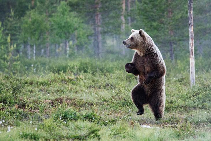 Смешные фотографии диких животных 20