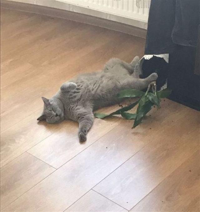 Ну и каково это – жить с котом? 12 забавных фото