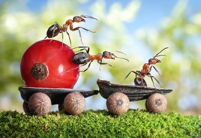 Средство от домовых муравьев