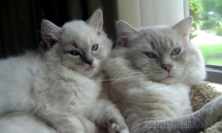 Сделать туалет для кошки и своими руками 674