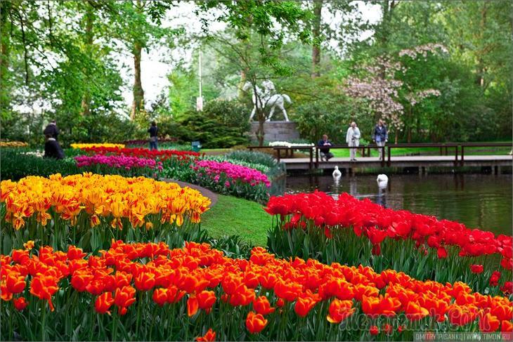 Сад в голландском стиле