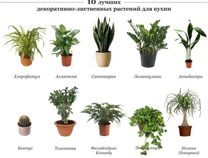 Цветы на кухне как выбрать и расположить растения