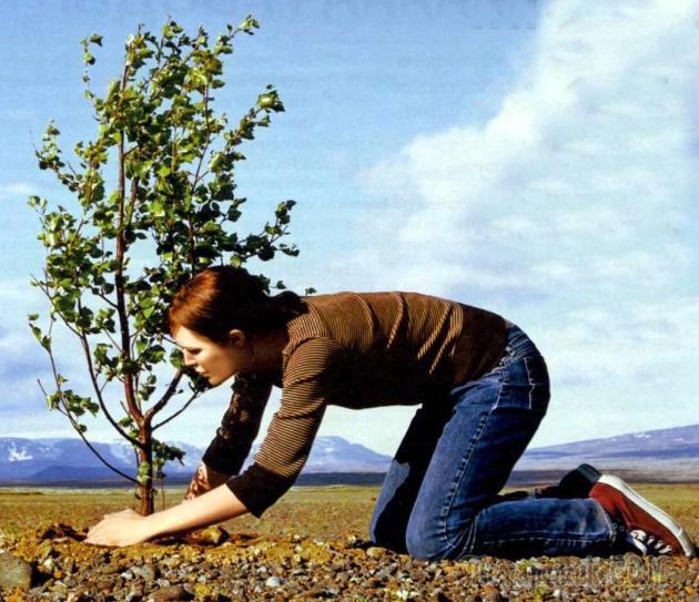 Соседство плодовых деревьев и кустарников