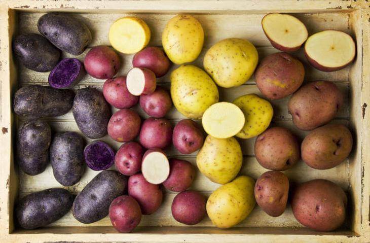 Картошка изсемян технология выращивания суперэлиты картофеля